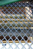 Grid mesh. Royalty Free Stock Photo