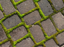 Grid of moss around the paving stones. Royalty Free Stock Photo
