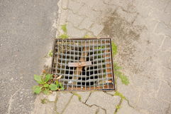Grid rain drain. Square shaped metal grid rain drain on a sidewalk Royalty Free Stock Photos