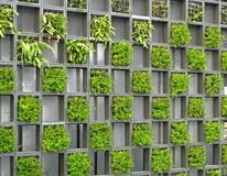 Grid wall of plants Stock Images