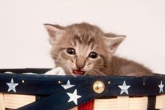 Gridare grigio spaventato del gattino Immagini Stock