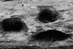 Grido di legno del pokerface del foro di legno del fronte impassibile Fotografia Stock
