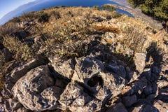 Griechenland-Hügelblume Stockfotografie