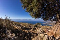 Griechenland-Hügelblume Stockfoto
