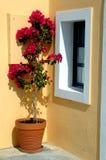 Griechenland-Inselblumenpotentiometer Stockfoto