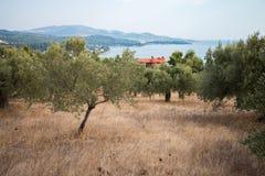 Griechenland-Natur Der malerische Park Stockfotografie