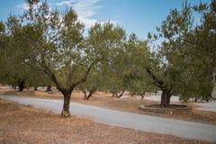 Griechenland-Natur Der malerische Park Stockfoto