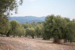 Griechenland-Natur Der malerische Park Lizenzfreies Stockbild