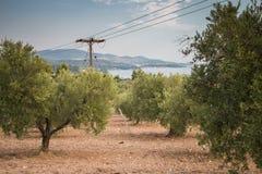 Griechenland-Natur Der malerische Park Lizenzfreie Stockbilder