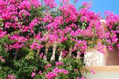 Griechenland. Rosafarbene Blumen auf dem weißen Balkon lizenzfreie stockfotografie