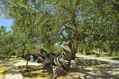 Griechenland, Zakynthos lizenzfreie stockfotografie