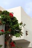Griechische Fassade mit Anlage Lizenzfreies Stockfoto