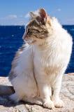 Griechische Kalikokatze an der Wand nahe Meer Stockfotos