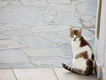 Griechische Katze Stockfoto