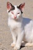 Griechische Katze Lizenzfreies Stockbild