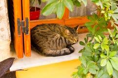 Griechische Katze auf dem Fenster Stockfotos