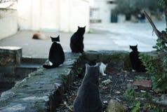 Griechische Katzen Lizenzfreies Stockfoto