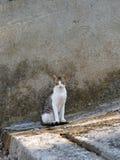 Griechische Straßenkatze auf Steintreppe Stockfotos