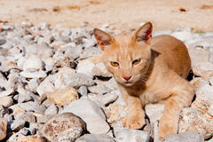 Griechische streunende Katze Lizenzfreie Stockfotografie