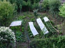 Griechischer Dorf-Garten Lizenzfreies Stockbild