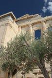 Griechischer Tempel und Olivenbaum Stockfotos