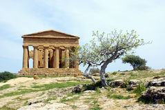 Griechischer Tempel und Olivenbaum Lizenzfreie Stockfotografie