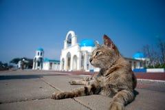 Griekse Architectuur met bulehemel met een kat Stock Afbeelding