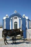 Griekse Ezels Stock Afbeelding