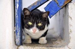 Griekse kat, Mykonos Stock Foto's