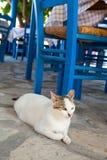 Griekse kat in restaurant Stock Foto