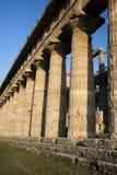 Griekse kolommen in Paestum, Italië Stock Foto's