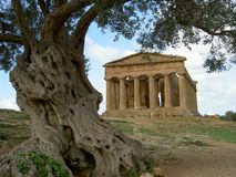 Griekse tempel & olijfboom royalty-vrije stock foto's