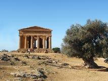 Griekse tempel met olijfboom Stock Afbeeldingen