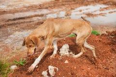 Griekse verdwaalde hond Stock Foto