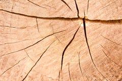 Grieta en las texturas de la teca Fotos de archivo