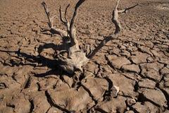 Grietas de la sequía Fotografía de archivo libre de regalías