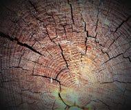 Grietas en el corte seco de un árbol Colores del contraste, polvo de madera imagen de archivo