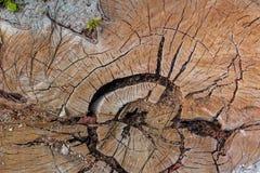 Grietas en un tocón de árbol Imagen de archivo