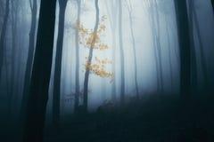 Griezelig achtervolgd bos met mist stock afbeeldingen