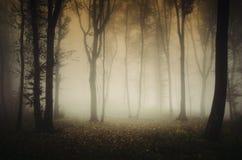 Griezelig angstaanjagend de herfstbos met mist stock afbeeldingen