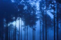 Griezelig blauw bos Royalty-vrije Stock Afbeeldingen