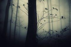 Griezelig bos met boom bij nacht stock afbeeldingen
