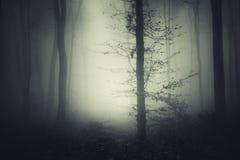 Griezelig bos met geheimzinnige mist bij nacht stock foto