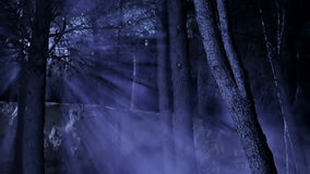 Griezelig bos met maanlichtstralen stock videobeelden