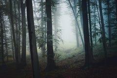 Griezelig bos met mist en magisch licht in de recente herfst royalty-vrije stock foto's