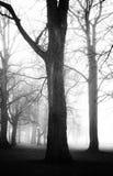 Griezelig donker bos in mist Royalty-vrije Stock Afbeelding