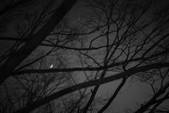 Griezelig Donker Landschap perspectief van het donkere overzicht van het droge bos en pijnboom in de nacht met sterrige hemel op  Stock Fotografie