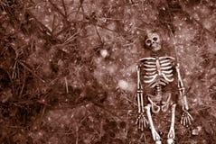 Griezelig Halloween skelet stock afbeelding