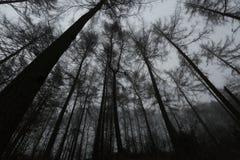 Griezelig hout stock afbeeldingen