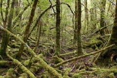 Griezelig loop crawly in het Nationale Park Tasmanige van Strathgordon royalty-vrije stock fotografie
